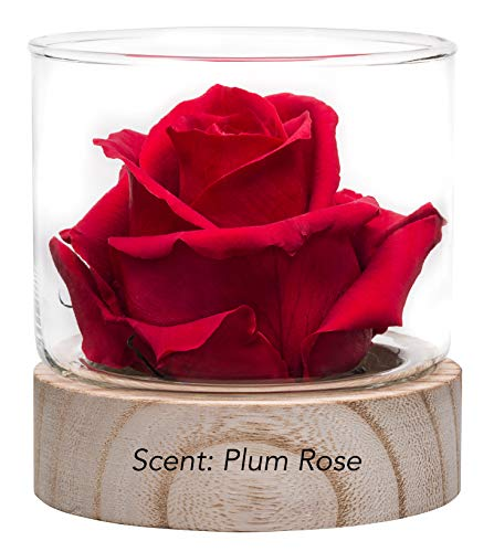 Sustainable Home Scent 12oz. A Real Fragrance Flower with Lasting abilities Similar to Scented Candle, Wax and Aroma Diffuser (Red/Fragrance L'Amour Rouge)